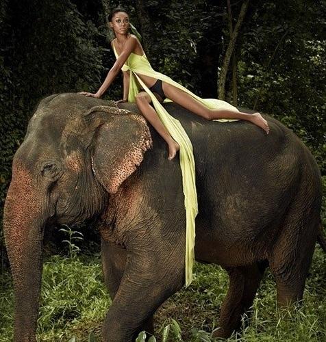 Топ-модель по-американски фотосессия со слоном
